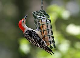 Bird Suet / Seeds / Houses
