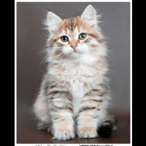 Fluffy Kitten Micro Mink Throw