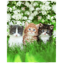 Summer Kittens Micro Mink Throw