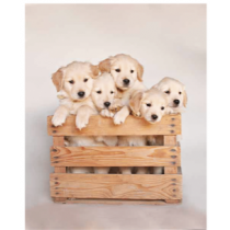 Puppy Family Micro Mink Throw