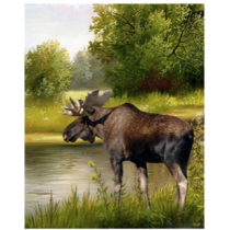 Moose By The Lake Micro Mink Throw