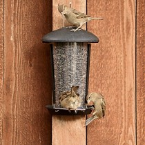 Perky-Pet Wall & Post Bird Seed Feeder