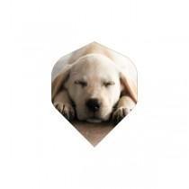 BD Flights ~ Puppy