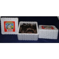 Baby Nightcrawlers {Dillies} ~ 24 per tub - OUT OF STOCK FOR SEASON