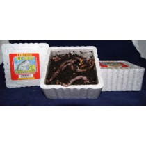 Big Reds Trout Worms ~ 24 per tub - OUT OF STOCK FOR SEASON