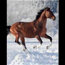 Snow Horse Micro Mink Throw