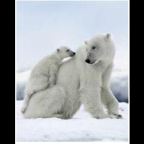 Polar Bear Cuddle Micro Mink Throw