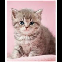 Soft Kitten Micro Mink Throw