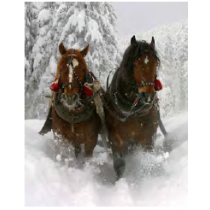 Horse Sleigh Ride Micro Mink Throw
