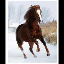 Winter Horse Micro Mink Throw