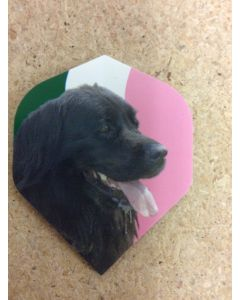 Metronic Flights ~ Newfoundland Dog