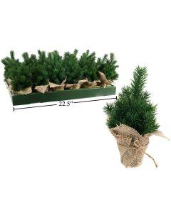 "Christmas Pine Tree in Burlap Pot ~ 4.5"" x 8"""