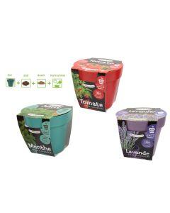 Grow Your Own Tomato / Mint / Lavender in Bio Pot Kit