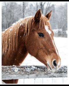 Rustic Horse Micro Mink Throw