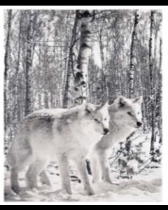Birch Forest Wolf Micro Mink Throw