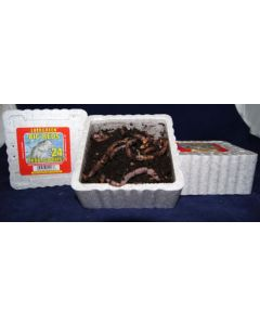 Big Reds Trout Worms ~ 24 per tub ~ CASE OF 32