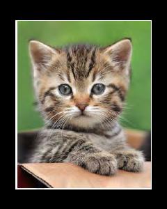 Cute Kitty Micro Mink Throw