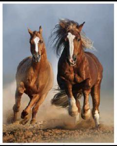 Running Horses Duo Micro Mink Throw