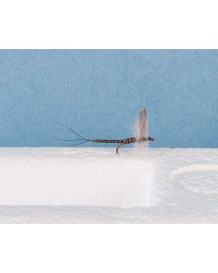 Blue Upright - Extended Body Trout Dry Fly